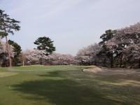 桜の季節には素晴らしい景色の中でラウンドを楽しむこともできる